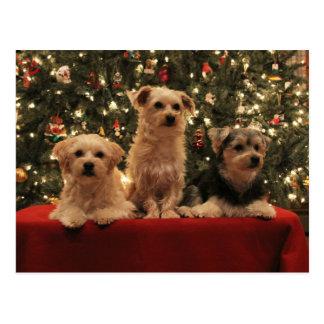 Lt de la postal 2 del navidad del perrito