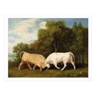 Lucha de toros, 1786 (aceite en el panel) postal