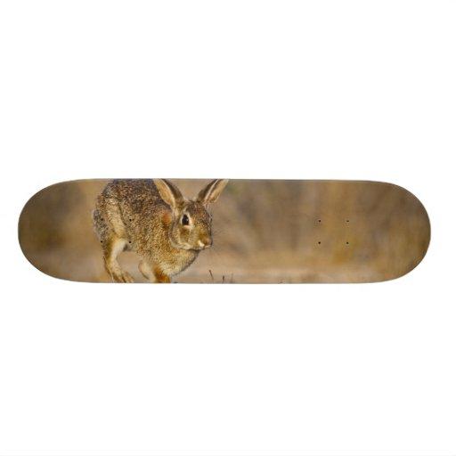 Lupulización del conejo de conejo de rabo blanco d patines