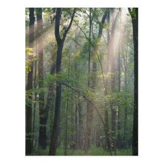 Luz del sol con Forrest Postal