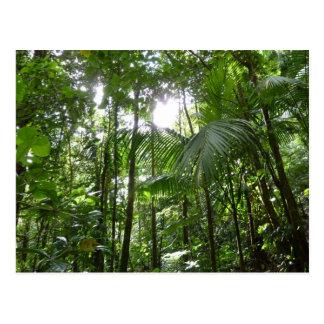 Luz del sol con verde tropical del toldo de la postal