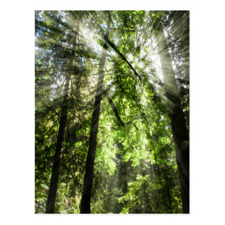 Luz del sol de la arboleda de la catedral para postal