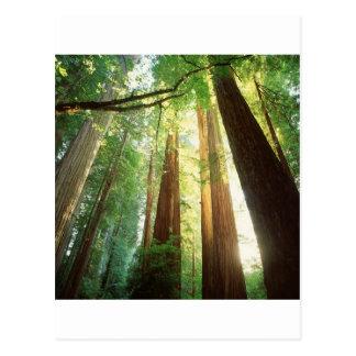 Luz del sol del verano de los árboles de la postal