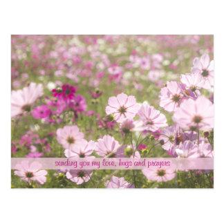 Luz del sol fucsia rosada preciosa del campo de postal