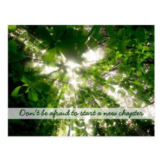 Luz del sol que fluye a través de árboles de las postal