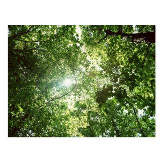 Luz del sol que fluye a través de las hojas de postal