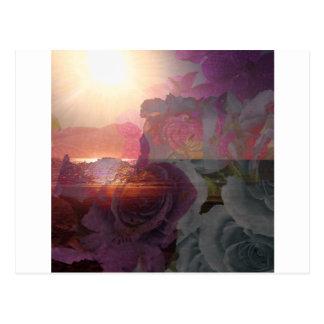 Luz del sol y rosas de la playa postal