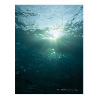 Luz que brilla en el arrecife de coral y la postal