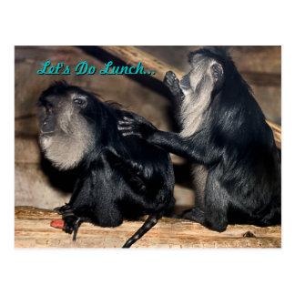 Macaques atados león divertido que preparan la pos tarjetas postales