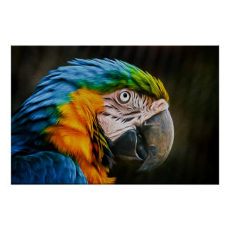 Macaw 02 - Arte de Digitaces