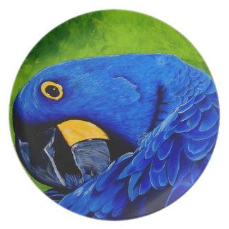 Macaw azul platos