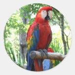 Macaw del escarlata, diseño rojo del photograp del etiqueta redonda