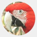 Macaw del escarlata etiquetas redondas