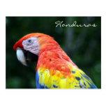 macaw Honduras del escarlata Tarjeta Postal