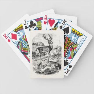 Macho del ciervo común del vintage con la gama y baraja de cartas bicycle