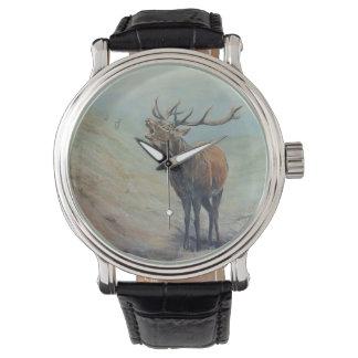 Macho del ciervo común que grita en una cañada de reloj de pulsera
