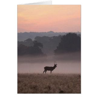 Macho en el amanecer - tarjeta del ciervo común de