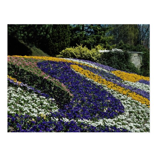 Macizo de flores amarillo, Mainau, flores de Postal