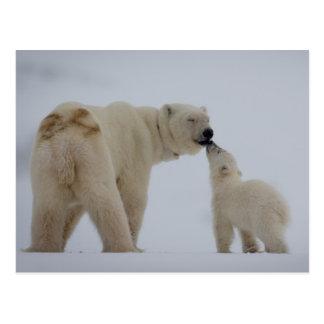 Madre del oso polar con el cachorro postal