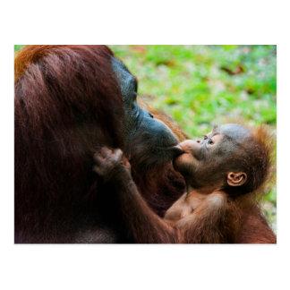 Madre y bebé del orangután tarjetas postales