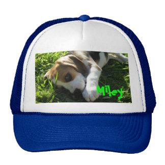 magnífico, Miley, beagle, lindo, perrito, perro Gorra
