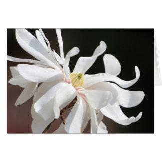 Magnolia blanca tarjeta de felicitación