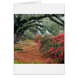 Magnolia Charleston de los robles de las azaleas d Tarjeton