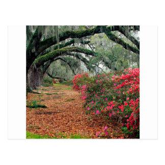 Magnolia Charleston de los robles de las azaleas d Tarjetas Postales