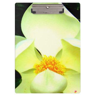 Magnolia Clipbord