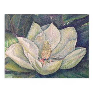 Magnolia de acero postal
