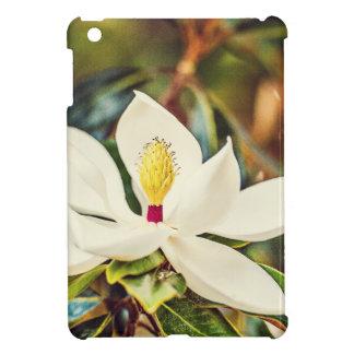 Magnolia en la floración