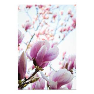 Magnolia Fotografia