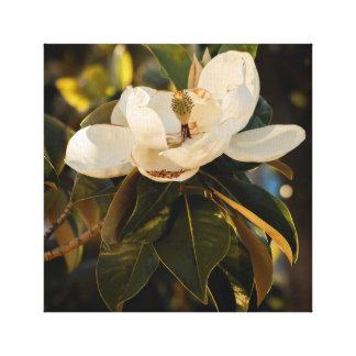 Magnolia Impresión En Lienzo