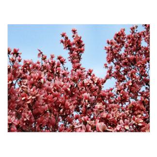Magnolia japonesa postal