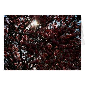 Magnolia japonesa tarjeta pequeña