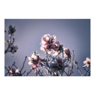 Magnolia majestuosa impresión fotográfica