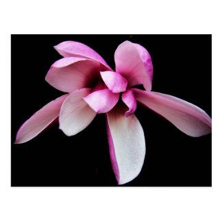 """""""magnolia"""" por las producciones de Coressel Postal"""