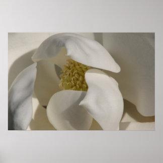 magnolia póster