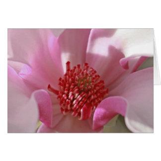 Magnolia rosada tarjeta pequeña