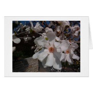 Magnolia Tarjeta De Felicitación