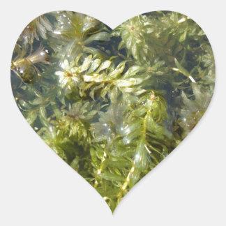 """Mala hierba de charca (o, """"charca enorme pegatina en forma de corazón"""