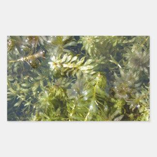 """Mala hierba de charca (o, """"charca enorme pegatina rectangular"""