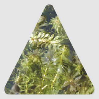"Mala hierba de charca (o, ""charca enorme pegatina triangular"