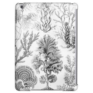¡Malas hierbas de Ernst Haeckel Fucoideae!