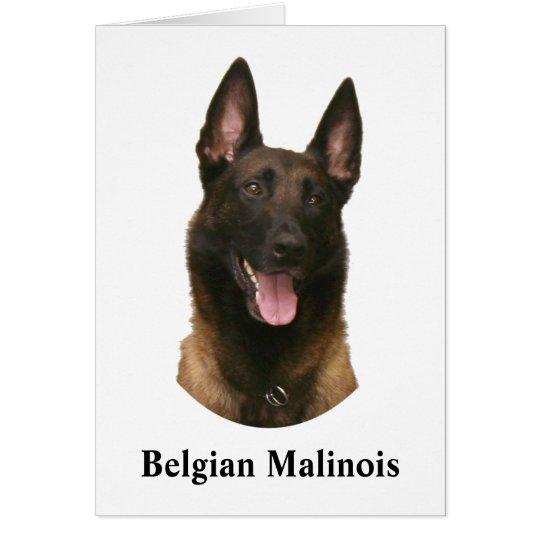 malinois belgas tarjeta de felicitación