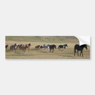 Manada de caballos pegatina para coche