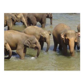 Manada de la postal de los elefantes
