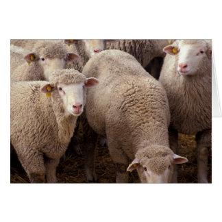 Manada de las ovejas felicitación