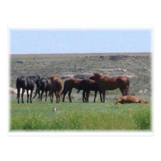 Manada de los caballos y del perro de las praderas postal