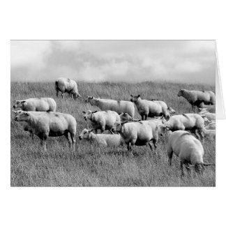 Manada de ovejas tarjetón